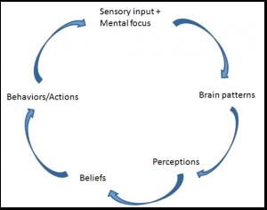 brain patterning cycle